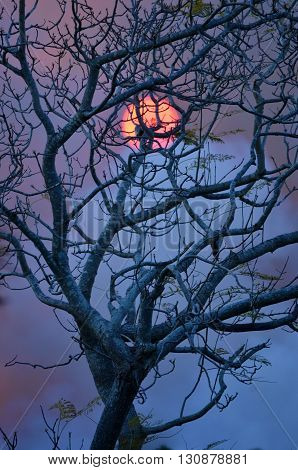 Eerie glowing sun behind bushfire smoke and leafless tree.