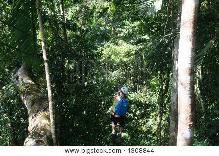 Jamaica Canopy Tour