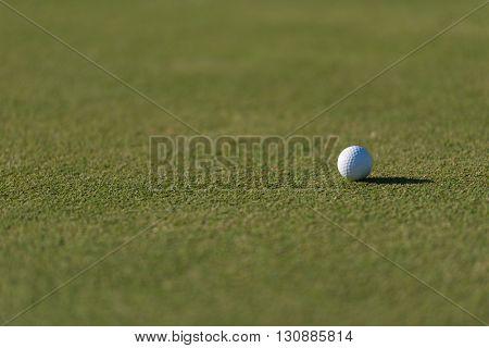 golf ball on fresh green grass of course