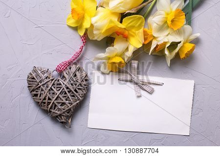 Fresh narcissus or daffodils flowers decorative heart and empty tag on grey textured background. Selective focus is on tag. Place for text.