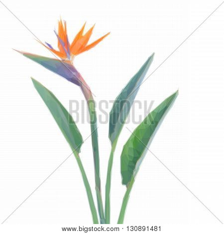 Low poly illustration Bird of paradize flower with green leaves