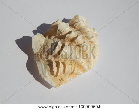 Songs of the sea and ocean shells, stones, clams on a white background