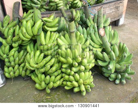 A set of bunches of banana on the banana store ready for sale