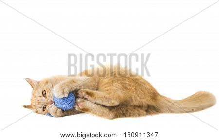 looking, love cat isolated on white background