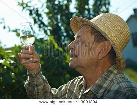 Senior vintner trying wine outdoors in vinery.