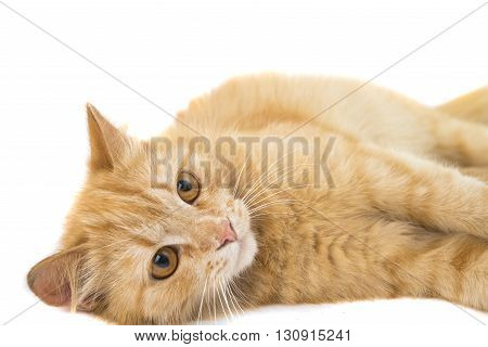 side, small, cat isolated on white background