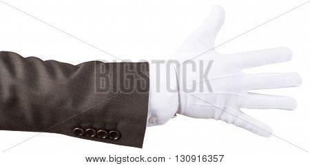Elegant human hand isolated on white background