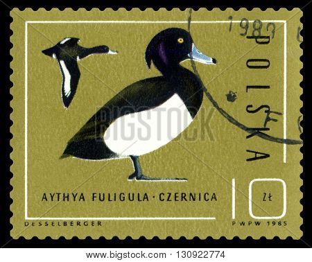 STAVROPOL RUSSIA - APRIL 30 2016: A Stamp sheet printed in Poland shows birds Aythya Fuligula Ducks circa 1985
