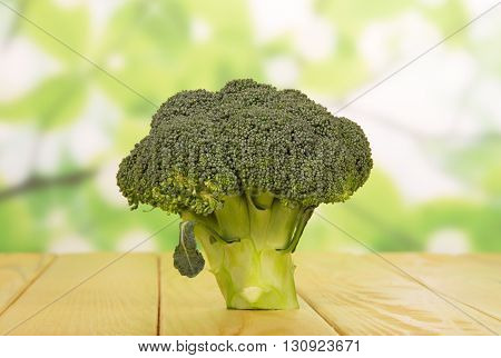 Fresh broccoli close-up on an abstract green background.