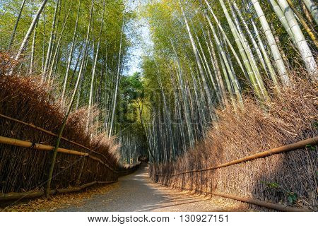 Peaceful path through the Arashiyama bamboo forest in Kyoto, Japan
