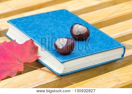On a wooden bench in the Park is a book chestnuts and red fallen autumn leaves.