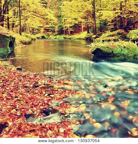 Colors Of Autumn Mountain River. Colorful Gravel With Fallen Rotten  Leaves, Leaves Trees Bended Abo