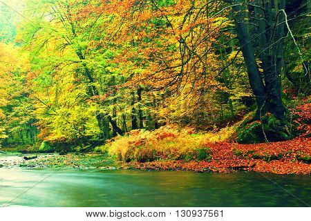 Rainy Evening At Stream. Autumn River Bank With Orange Beech Leaves. Fresh Green Leaves On Branches.