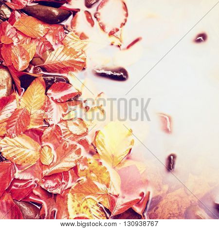 High Key. Fallen Beech Leves And Stones In Water Of Mountain River, First Colorful Leaves Bellow Mir