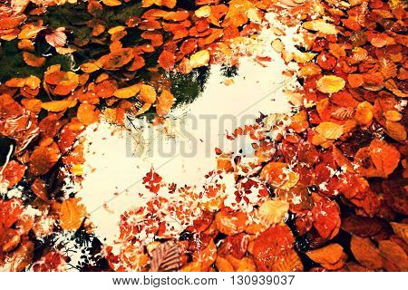 Mirror In Water. Frame In Leaves. Fallen Beech Leves And Stones In Water Of Mountain River, First Le