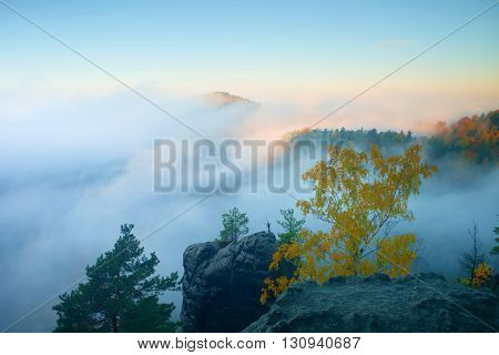Land Of Fog. View Through Branches To Dreamy Deep Misty Valley Within Daybreak. Foggy And Misty Morn
