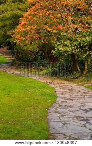 NEWSTEAD ENGLAND - APRIL 30: Tranquil pathway section and a colourful Acer tree in the Japanese Gardens. At Newstead Abbey Newstead Nottinghamshire England. On 30th April 2016.