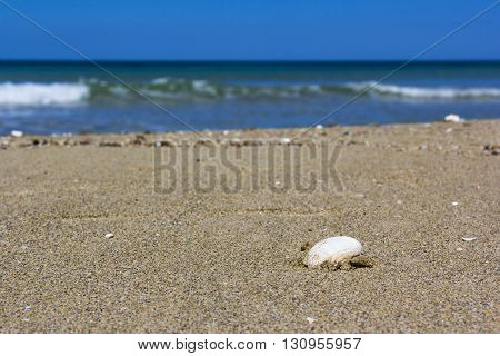 Sea Salento, shell on the sandy beach