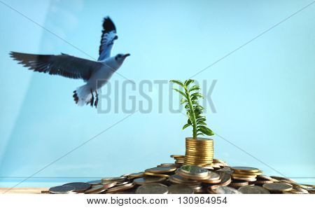 Stack Of Coins With Small Plant Growing Out Of It - Investment And Interest Concept