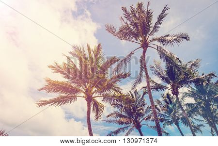 coconut tree on beach tree on beach palm on beach beach vintage beach retro.