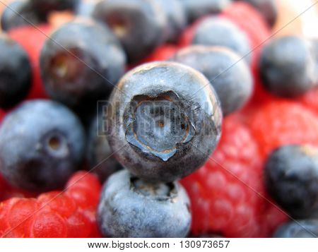 Fresh blueberry stands out from raspberries and other blueberries in background.
