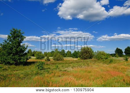 Summer rural landscape with blue sky and clouds