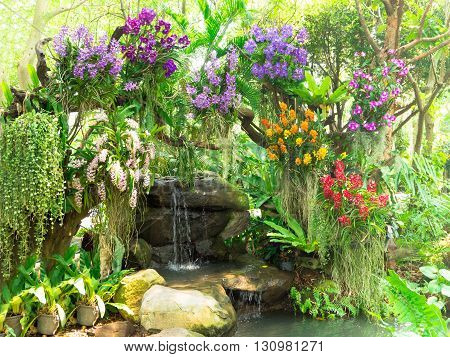 A little water fall in garden decorating with colorful orchids