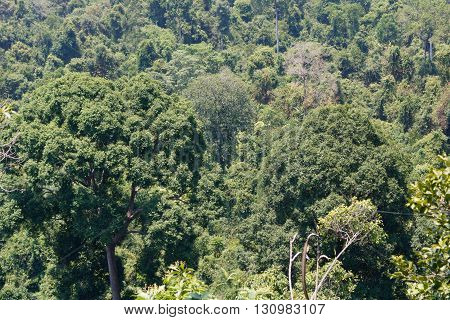 Dry Evergreen Forest in south of Thailand
