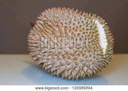King of Fruit, Durian ready to be ripped with aqua and dark grey background