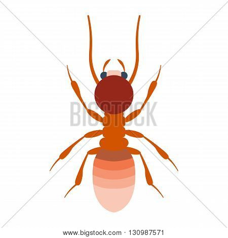 Termite vector illustration. Termite isolated on white background