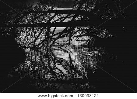 Silhouettes of tree and branches reflecting in the mirror smooth water