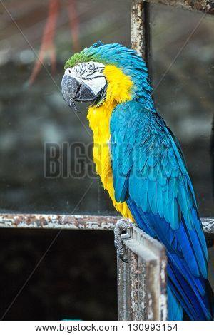 Portrait of a beautiful macaw parrot bird