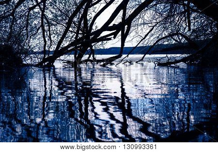 Silhouettes of tree and branches reflecting in the mirror smooth water at moonlight