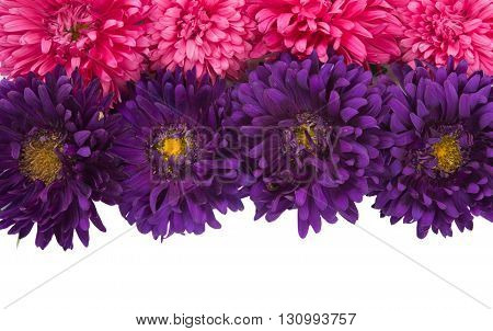 weed, beautiful aster isolated on white background
