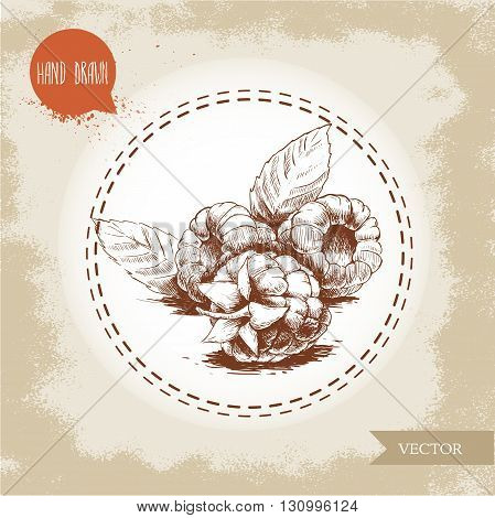Hand drawn raspberries isolated on vintage background.Retro sketch style vector eco food illustration