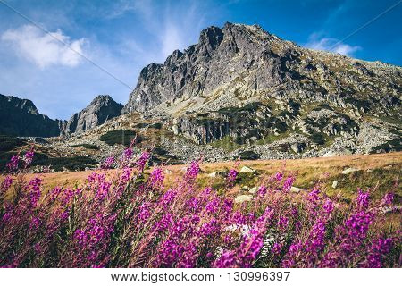 Flowers in Tatra Mountains National Park Poland
