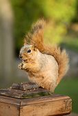 Cute Squirrel Sitting In Deck Post poster