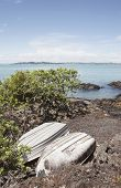 pic of scoria  - two weathered rowboats soak up the sun on the shore of rangitoto island hauraki gulf new zealand - JPG