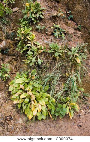 Zion National Park Plantlife