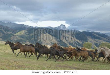 Pferd-Roundup