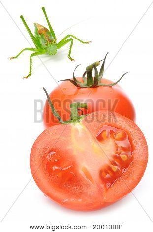 Tomatoes And Grasshopper