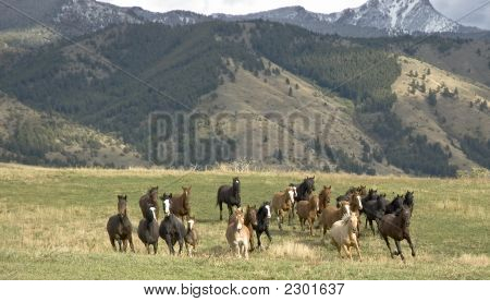 Horses Stampeding Toward The Camera