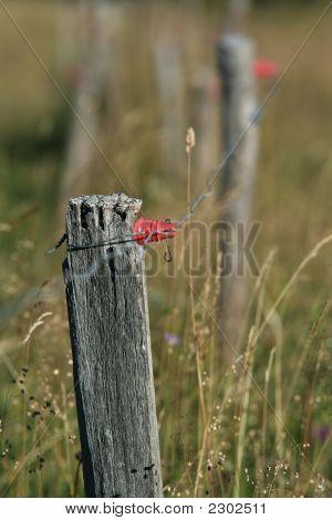 Fence Alp Pasture