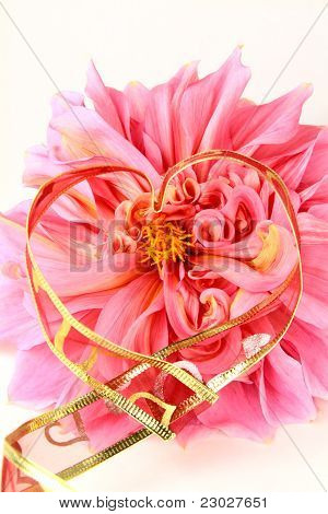 pink  flower  with a red ribbon