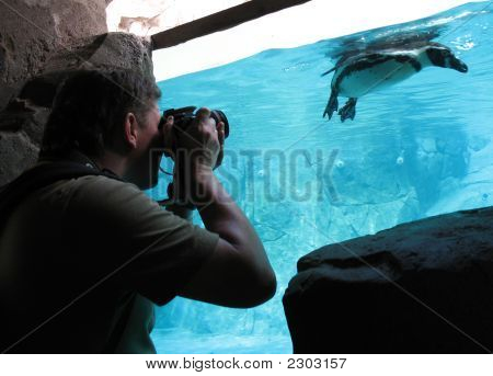 Photographer And Penguin