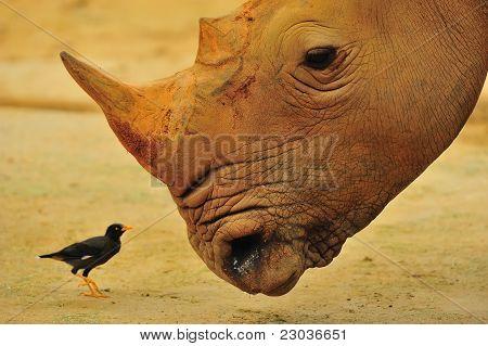 Big & small friends
