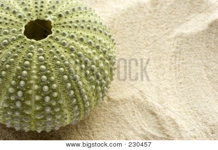 Sea Urchin And Sand