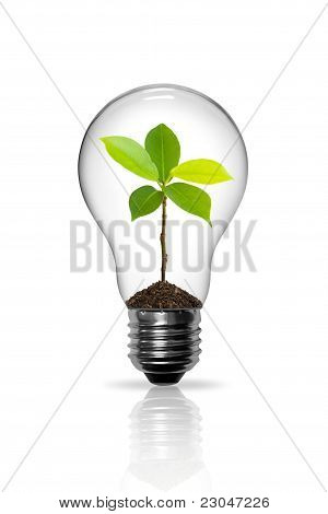Seedlings grown in light bulb