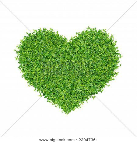 Grass and plants, small green heart.