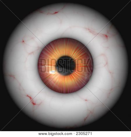 Globo ocular grande